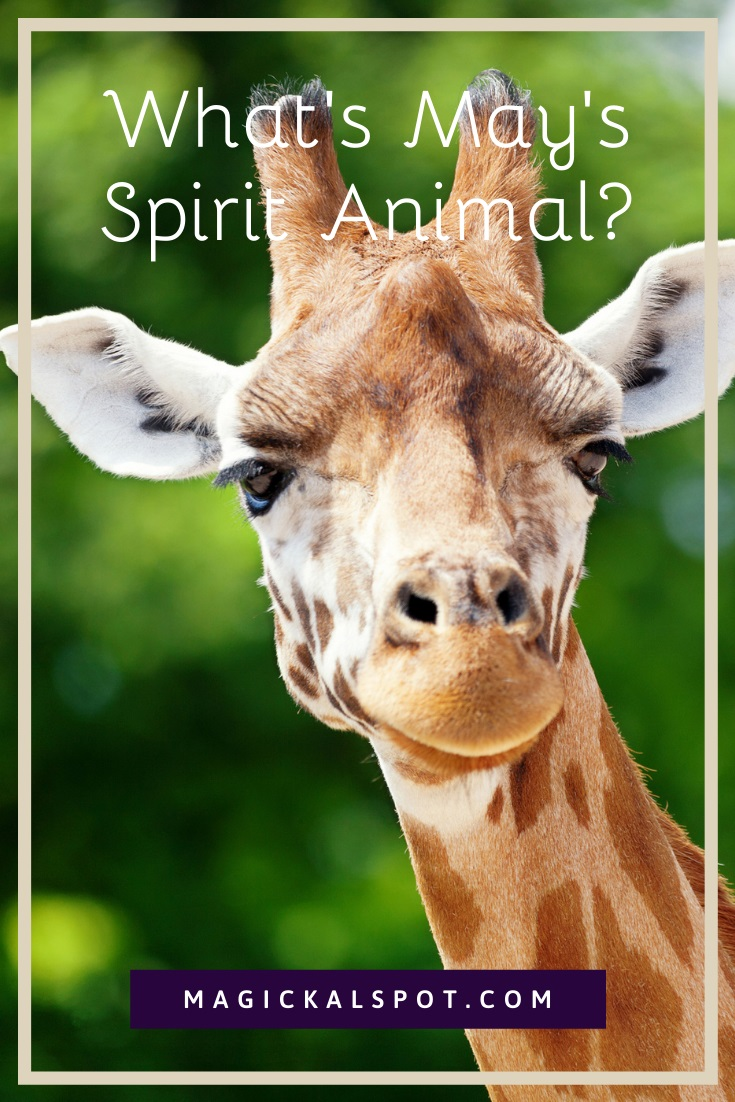 What's May's Spirit Animal by Magickal Spot